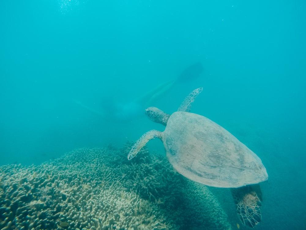 Ripple Effect - Port Douglas - Sea Turtle