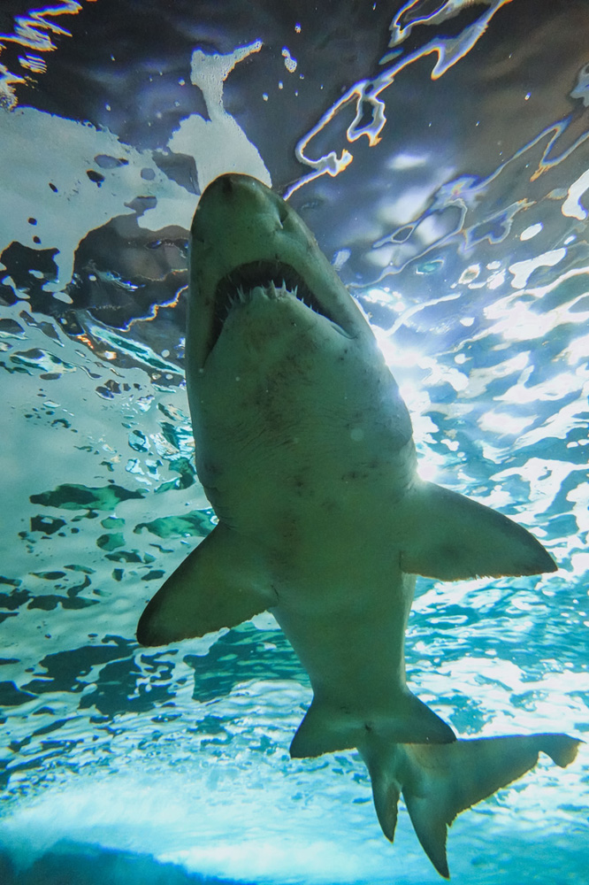 Illuminate - Sydney - Shark Dive
